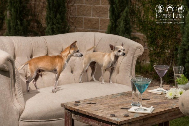 Austin Pets Alive Photo Shoot