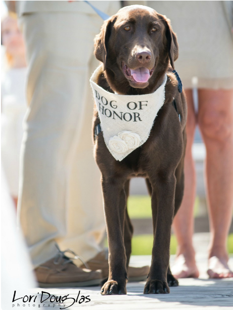 doggo of honor